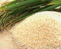 稻米的做法